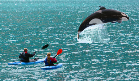 CA Orca-Kayak Alaska_10836760