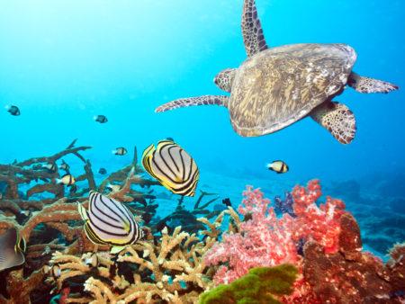 Ningaloo Marine Park Australien Westen