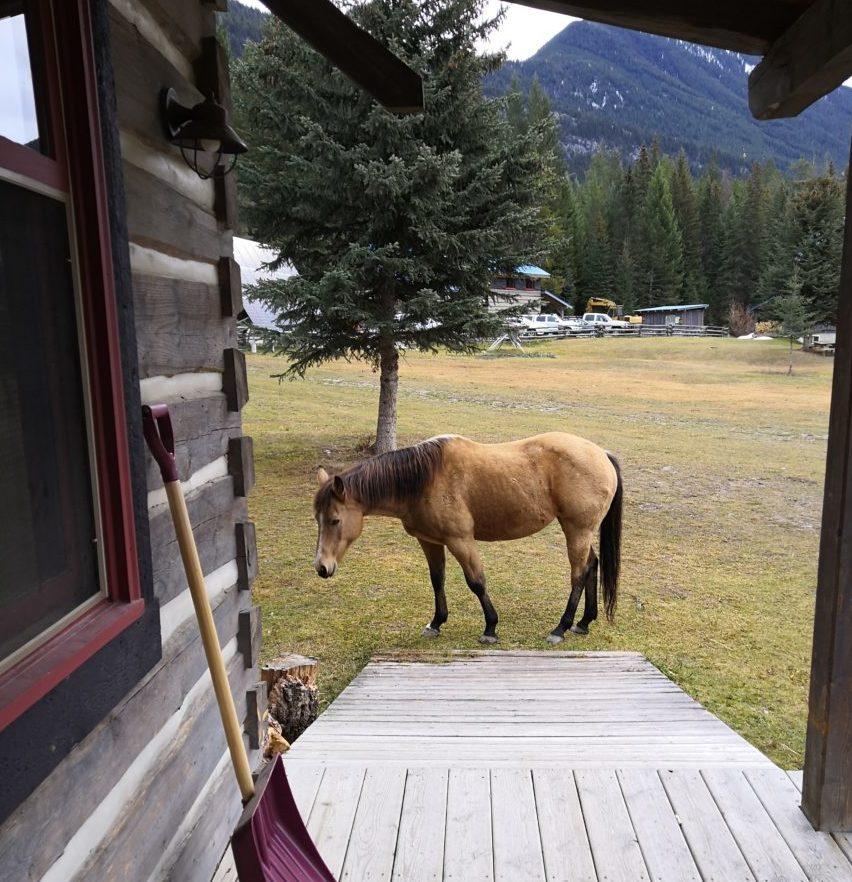 Pferde vor unserer Cabin