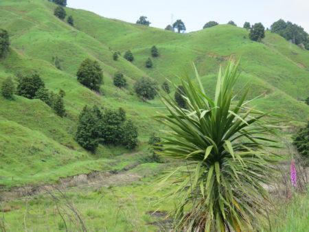 landschaft neuseeland