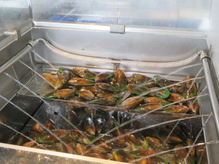 green lips mussels nz