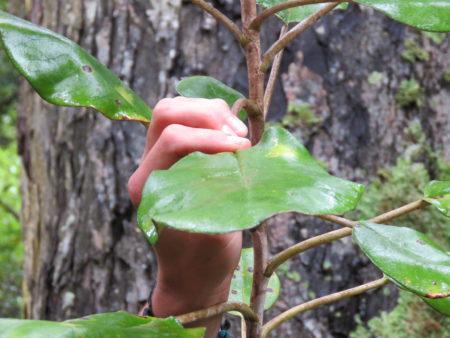 Vegetation Stewart Island