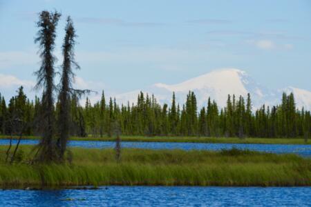 Buchli Alaska 2018