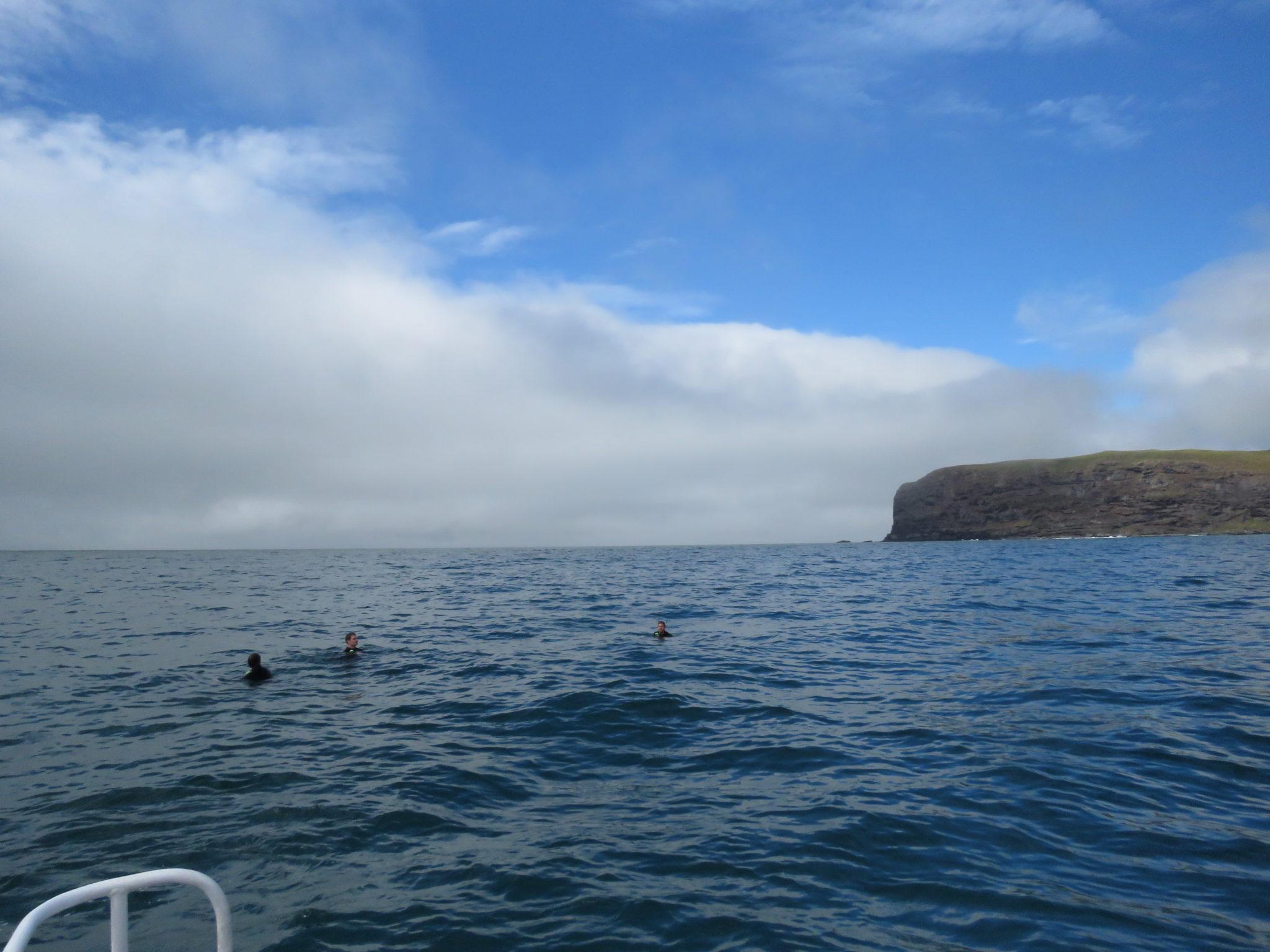 Schwimmen mit Delphinen in Akaroa