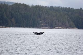 Wal Kanada