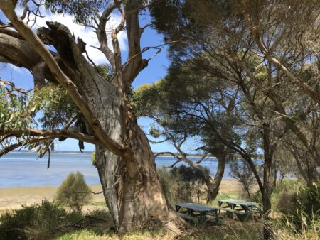 Kangaroo Island Pause