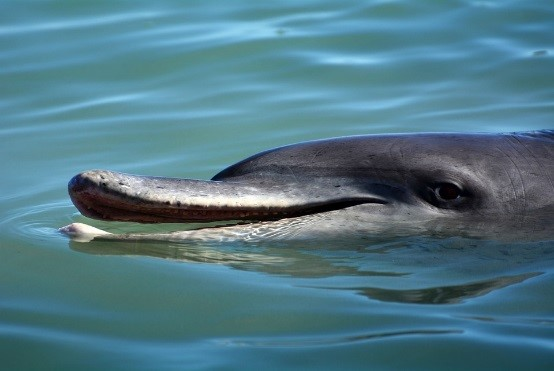 Schwimmen mit Seelöwen und Delphin