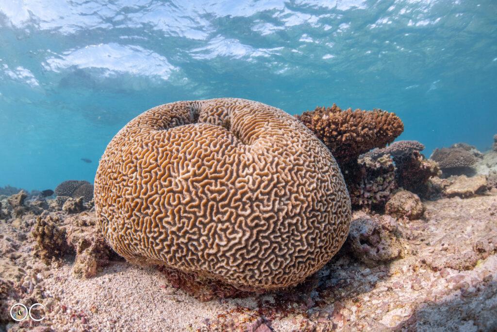 Schnorchelausflug Ningaloo Reef