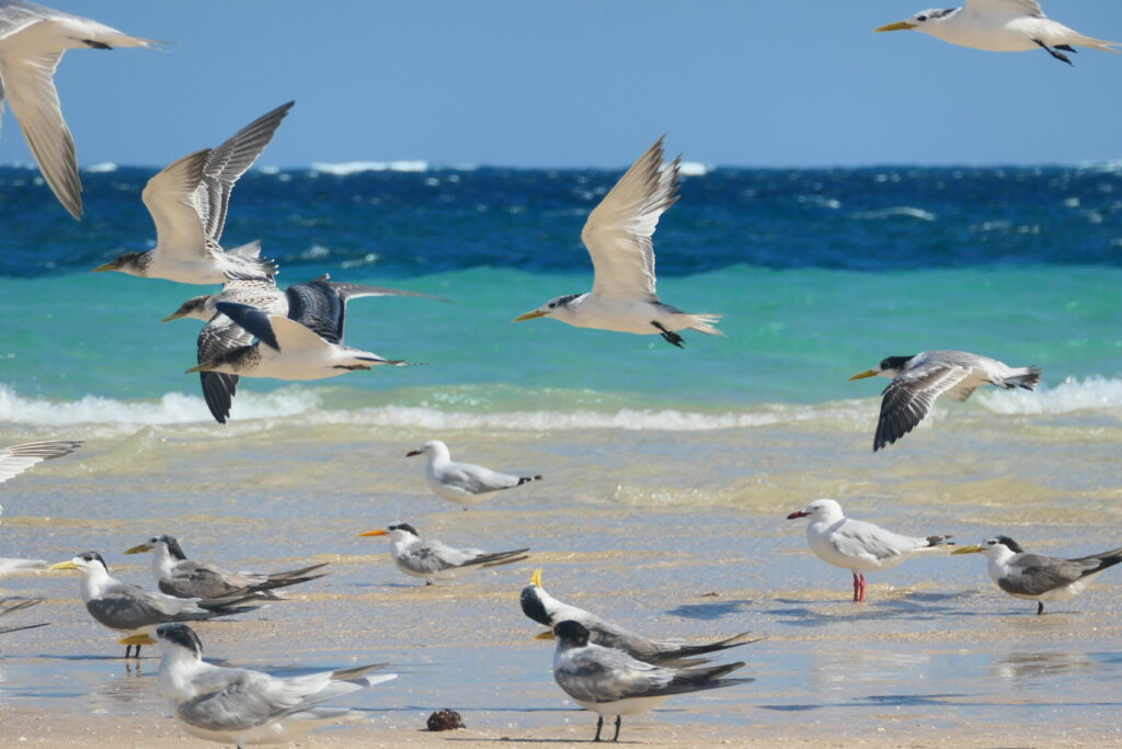 Spaziergang Skeleton Bay Coral Bay Westaustralien