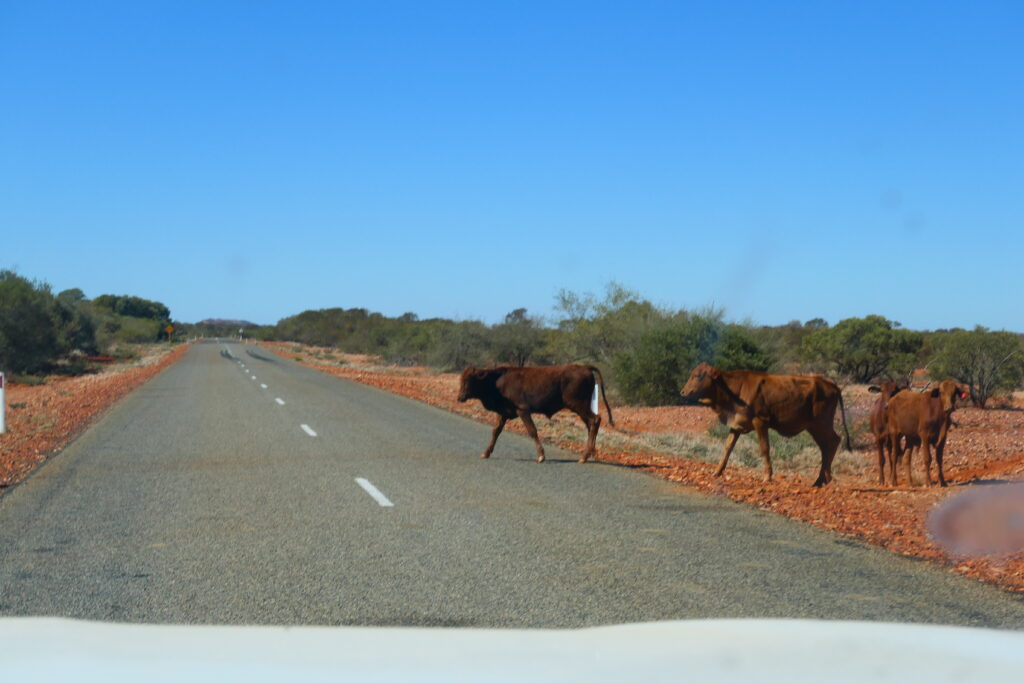 Kühe am Strassenrand